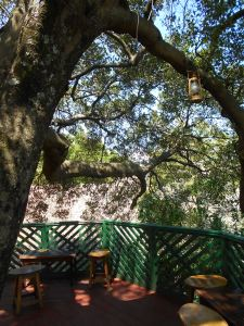 Fig Tree Resort tree house
